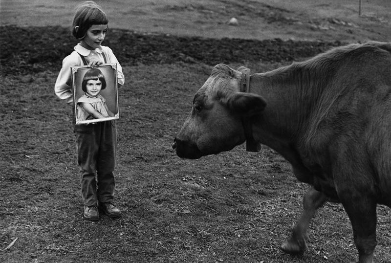 sune jonsson 'flickan, kossan och porträttet'