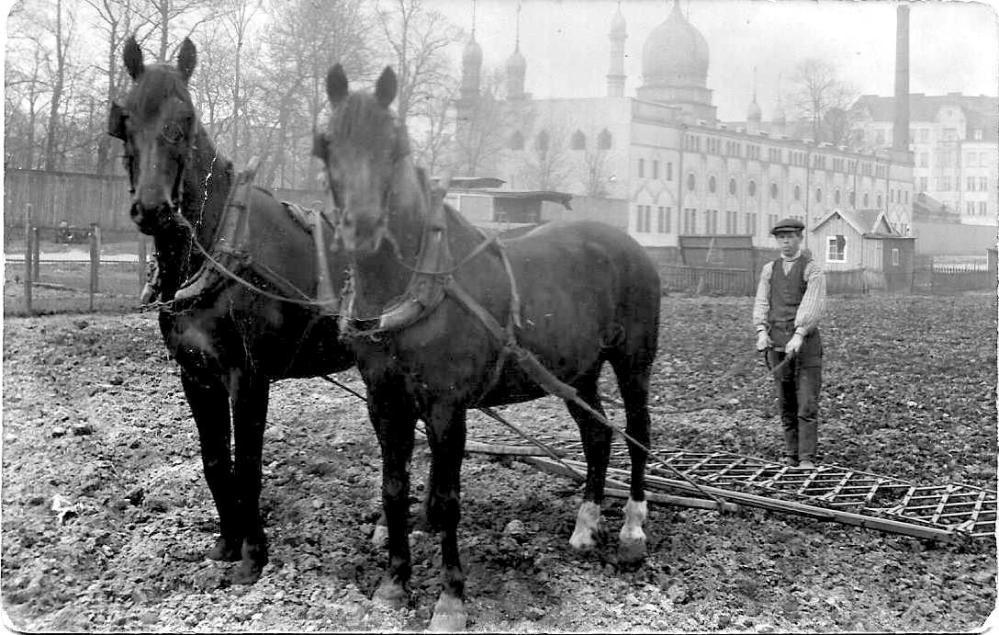 jordbruk i folkets park